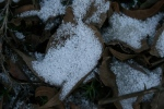 "closeup of ""styrofoam snow"""