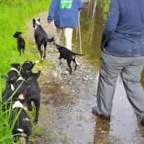 Pups training