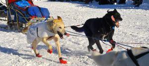 Wheel dogs