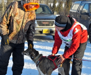 Wade Marrs and his Junior musher