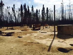Doghouses surrounded by scorched trees