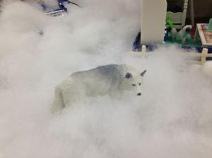 A wolf roams Nome